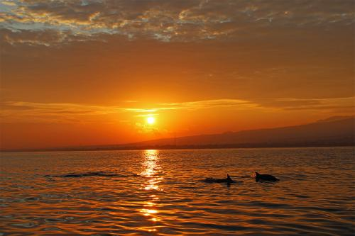 Lovina Sunrise - Dauphin